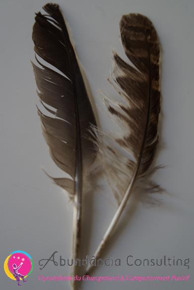 buying cheap new lifestyle promo codes Symbolique des Plumes, ange, oiseau, rituel chaman